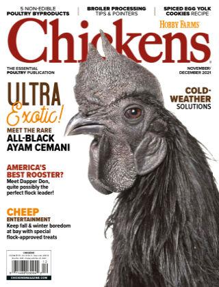 Chicken Nov/Dec