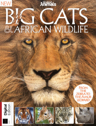 World Of Animals Book Of Big Cats & African Wildlife Seventh Edition