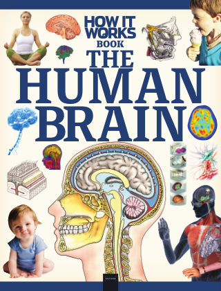 How It Works The Human Brain 1st Edition